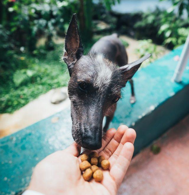 Hund der spiser